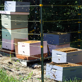 dividing the hives