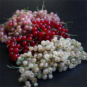 pink, red, white currants