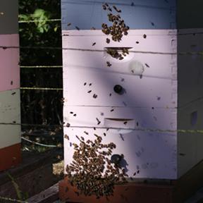 freeda's hive