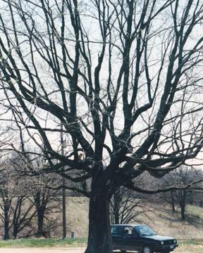 hoops in tree