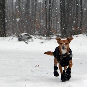 adventure-pup