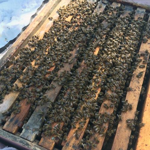 spring honeybee hive