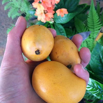 mango-pequeños